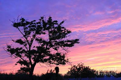 Photograph - Purple Passion Horizontal by Scenesational Photos