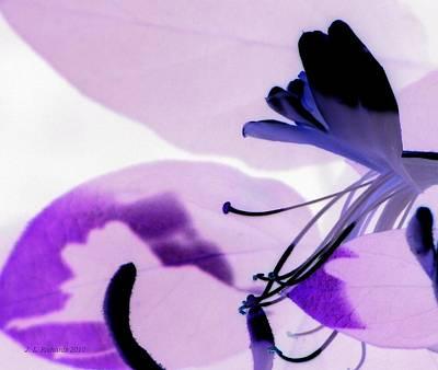 Photograph - Purple Passion by Jennie Richards
