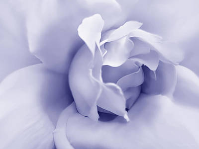 Photograph - Purple Pastel Rose Flower by Jennie Marie Schell