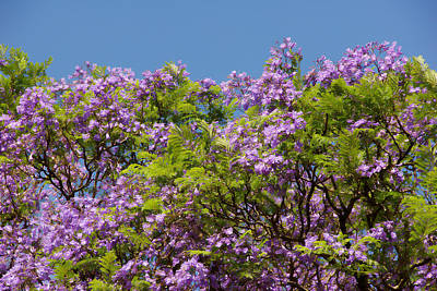 Nature Painting - Purple Prelude by Georgiana Romanovna