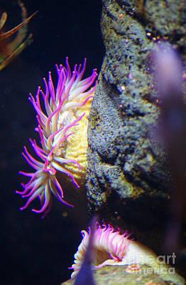 Keith Richards - Purple Sea Creature by Randy Harris