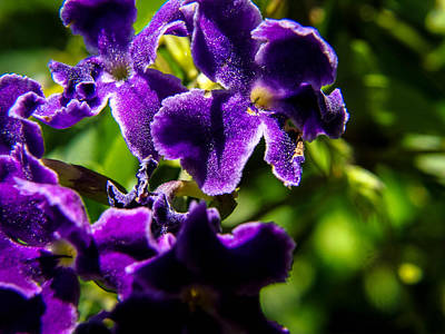 Flower Photograph - Purple Shadows by Stacy Michelle Smith