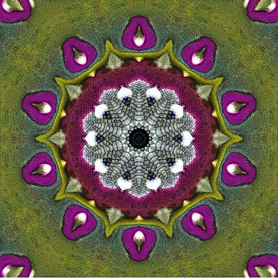 Purple Snakeskin Flower Art Print by Alec Drake
