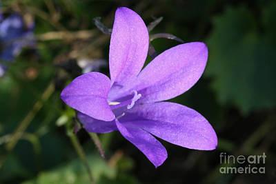 Photograph - Purple Sparkle by Jo