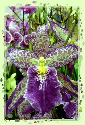 Photograph - Purple Spotted Orchid by Cindy Wright