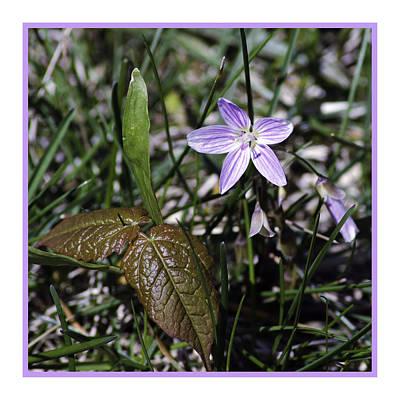 Purple Spring Trail Flower Art Print