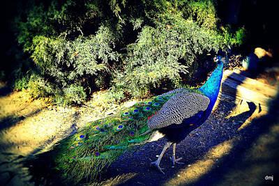 Photograph - Purple Stroll  by Diane montana Jansson