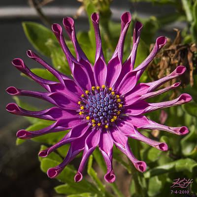 Purple Sun Art Print