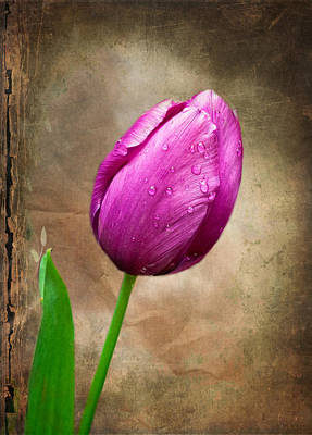 Photograph - Purple Tulip by Fred LeBlanc