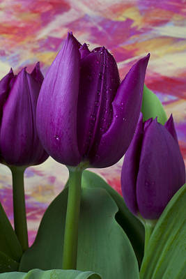 Colorful Leaves Photograph - Purple Tulips by Garry Gay