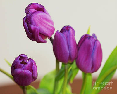 Photograph - Purple Tulips V2 by Donna L Munro