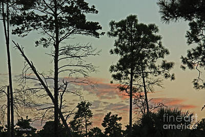 Photograph - Purple Twilight by Terri Mills