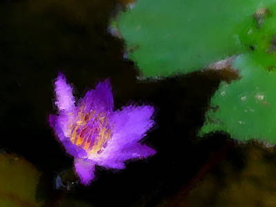 Photograph - Purple Water Lily by Chua  ChinLeng