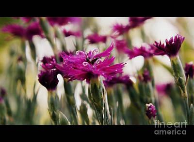 Photograph - Purple Wildflowers by J Kinion