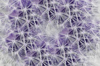 Purple Wishes Art Print