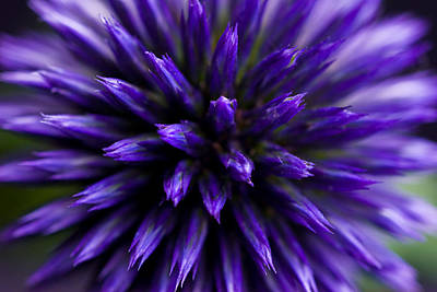 Art Print featuring the photograph Purple Zoom by Trevor Chriss