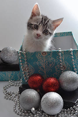 Photograph - Purr-fect Christmas. by Terence Davis