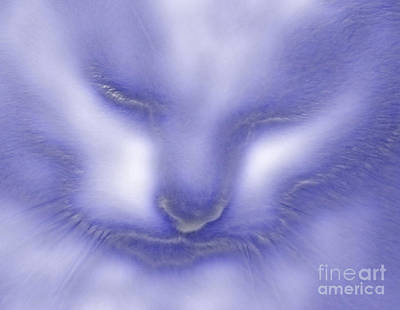 Digital Puss In Blue Art Print by Linsey Williams