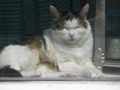 Briex Photograph - Pussycat In The Sun Behind The Window by Nop Briex