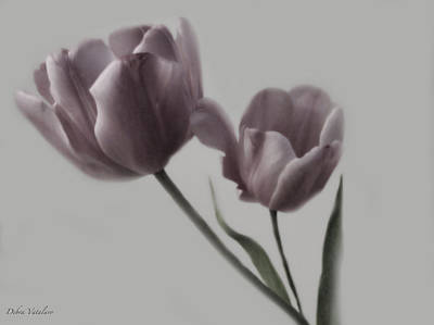 Putty Pale Tulips  Art Print by Debra     Vatalaro