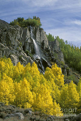 Photograph - Quaking Aspen Waterfall - Eastern Sierra by Craig Lovell
