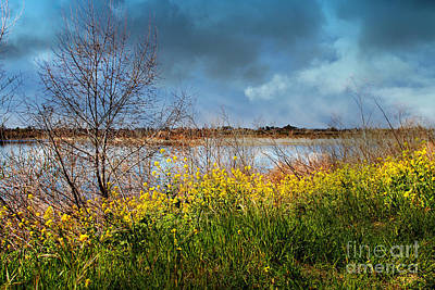 Quarry Lakes In Fremont California . 7d12643 Art Print by Wingsdomain Art and Photography