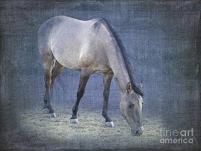 Quarter Horse In Blue Art Print by Betty LaRue