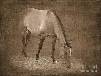 Quarter Horse In Sepia Art Print by Betty LaRue