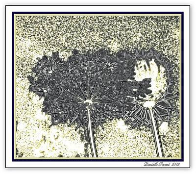 Queen Ann Lace Illustrated Art Print by Danielle  Parent