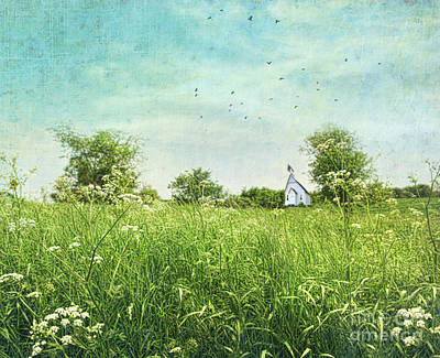 Queen Anne's Lace Wildflowers Art Print by Sandra Cunningham