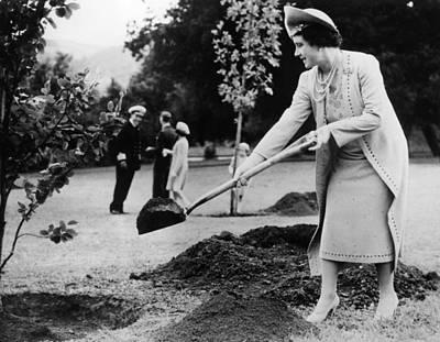 Naval College Photograph - Queen Elizabeth, The Former Duchess by Everett