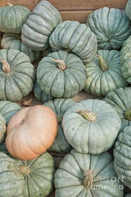 Train Photography - Queensland Blue Pumpkin Gourds by Anne Kitzman
