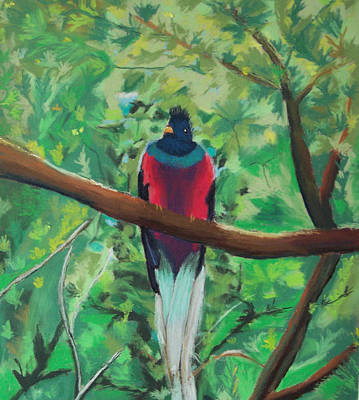 Painting - Quetzal In Costa Rica by Dana Schmidt