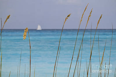 Photograph - Quiet Day At The Beach by Dennis Hedberg