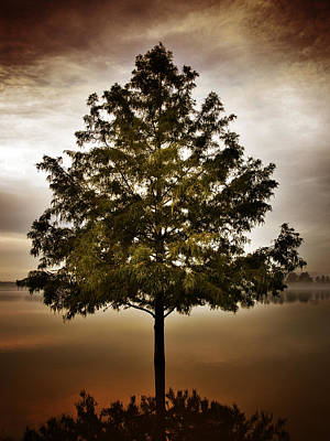 Creve Coeur Park Photograph - Quiet Tree by Patrick Pope