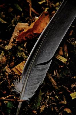 Forest Floor Photograph - Quill by Odd Jeppesen