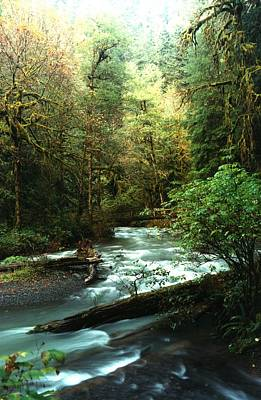 Art Print featuring the photograph Quineault Rain Forest by Rick Frost