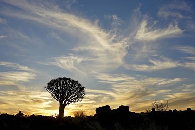 Photograph - Quivertree With Clouds by Michele Burgess