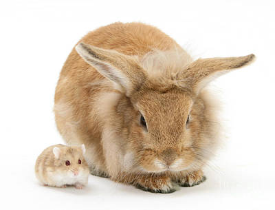 Photograph - Rabbit And Dwarf Hamster by Mark Taylor