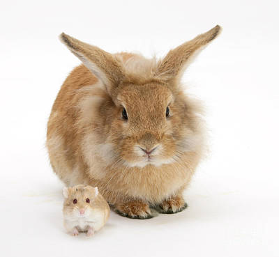 Hamster Baby Photograph - Rabbit And Hamster by Mark Taylor