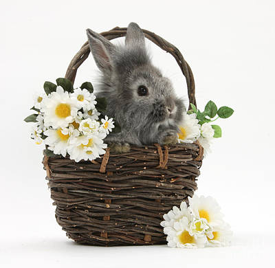 House Pet Photograph - Rabbit In A Basket With Flowers by Mark Taylor