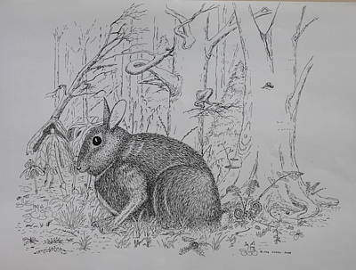 Drawing - Rabbit In Woodland by Daniel Reed