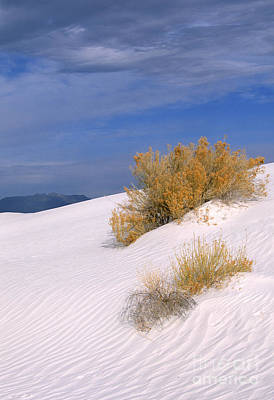 Photograph - Windswept - White Sands National Monument by Sandra Bronstein