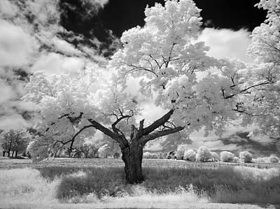 Photograph - Radiance by John Jacquemain