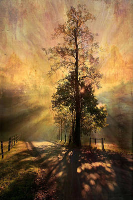 Laura James Photograph - Radiating Tree by Laura James