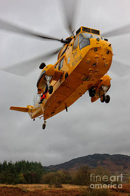 Animal Paintings David Stribbling Royalty Free Images - Raf Seaking - Mountain rescue Royalty-Free Image by Rory Trappe