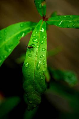 Photograph - Rain by David Weeks