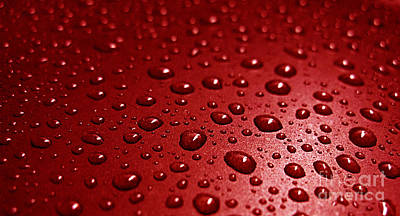 Photograph - Rain Drops Bloody Red  by Ausra Huntington nee Paulauskaite