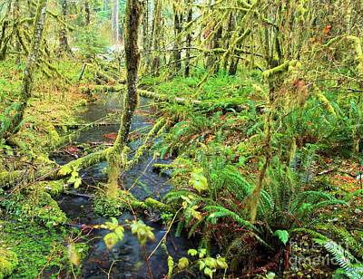 Photograph - Rain Forest Creek by Adam Jewell