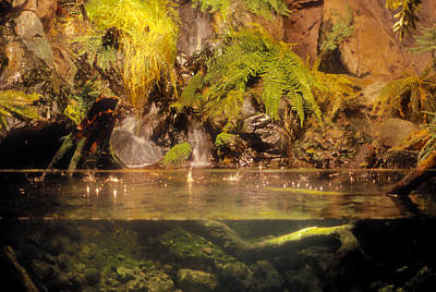 Photograph - Rain Forest Pool by Mark Dodd